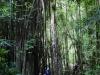 bamboopathmanoa
