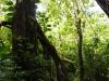 pathvinetree