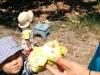 ノニの木のフルーツ