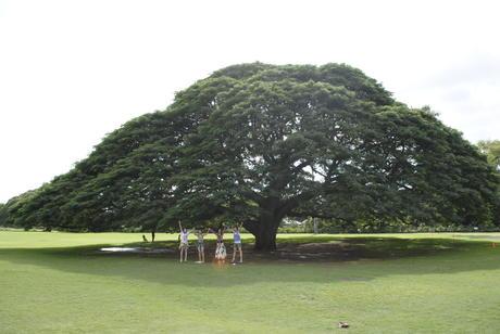 ハワイの歴史と文化 -この木何の木とモアナルアガーデン-