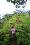 hikeupstairs