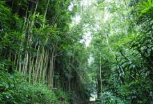 stepsbambooforest