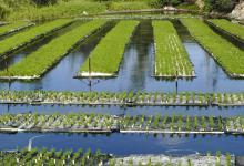 waterfarming